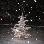 A beautiful snowy night and our Charlie Brown Christmas Tree in Meadow Park