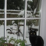 Maggie enjoying the snow...from inside the house, thank you.
